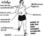 เทคนิคการวิ่งระยะไกลการ์ตูน1.jpg