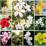ดอกไม้อาเซียน.jpg